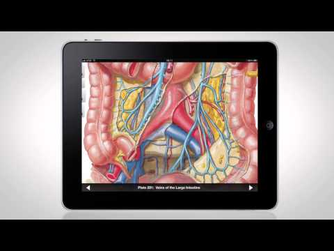 Netter's Anatomy Atlas for iPad®