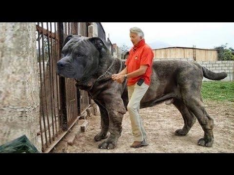 Sahibini En İyi Koruyan 10 Köpek Cinsi