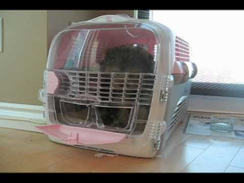 Yorkiepuppies Youtube on Our Yorkie Puppy Kept Escaping From Her Crate And We