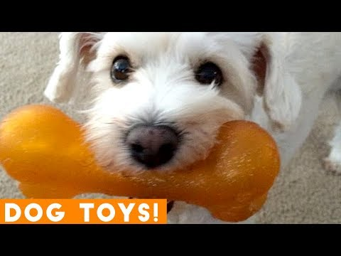 Funny cat videos - Funniest Dogs and Their Favorite Toys EVER  Funny Pet Videos