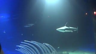 Este es el nuevo acuario Inbursa, el mas grande de América Latina, que se encuentra en la ciudad de México. Bastante recomendable ir a visitarlo. Se encuentr...