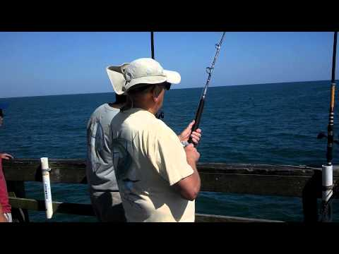 Seaview Fishing Pier's 1st Cobia of 2013 – North Topsail, NC