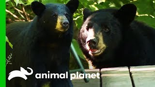 Tackling A Bear Feeding Problem At A New Hampshire Home | North Woods Law by Animal Planet