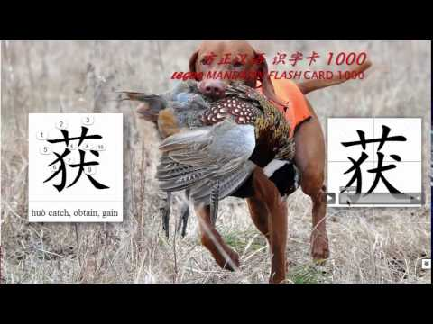 Origin of Chinese Characters -0401 获 獲 huò catch, obtain, gain - Learn Chinese with Flash Cards