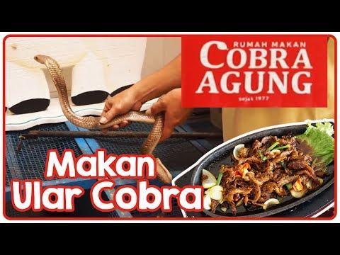 RM. Cobra Agung Malang. Nikmatnya Sensasi Makan Ular Cobra. Kuliner Indonesia.