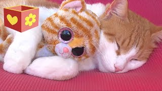 Video Cute Cat part two   Video for children and toddlers   Bellboxes    Funny cat Simba aww   part 2 MP3, 3GP, MP4, WEBM, AVI, FLV Maret 2018