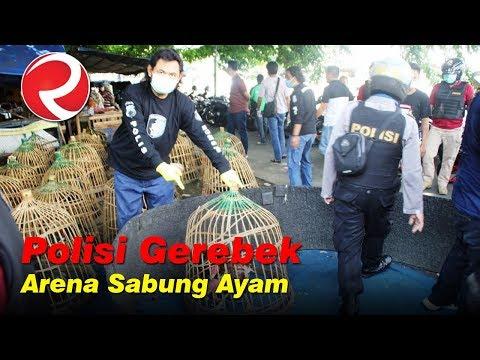 Polisi Gerebek Sabung Ayam di Kawasan Mberok Semarang
