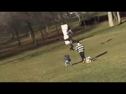 არწივმა 1 წლის ბავშვი მოიტაცა (ვიდეო)