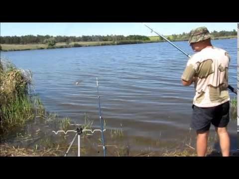 как ловить толстолобика в прудах и белого амура