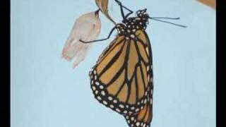 Time-lapse of Butterfly Lifecycle