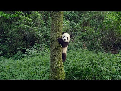 A trailer has dropped to a new movie about pandas; and take our money and everything we own