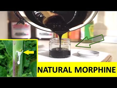 Natural Pain Relief Plant Extract Like Morphine to Cure Many Pain Problems Naturally