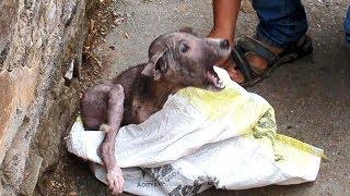 Niesamowita transformacja szczeniaka po akcji ratunkowej