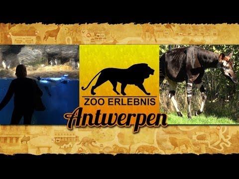 Antwerpen/Belgien: Zoo Antwerpen - Zoo Erlebnis #4