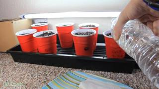 Day 6 Transporting Seedlings by Grow420Guide