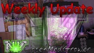 Weekly Update 6/22/2017 by  NVClosetMedGrower