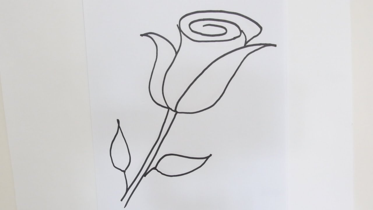How To Draw A Rose Flower Easy Stepbystep Drawing Lessons For How To Draw A  Cartoon