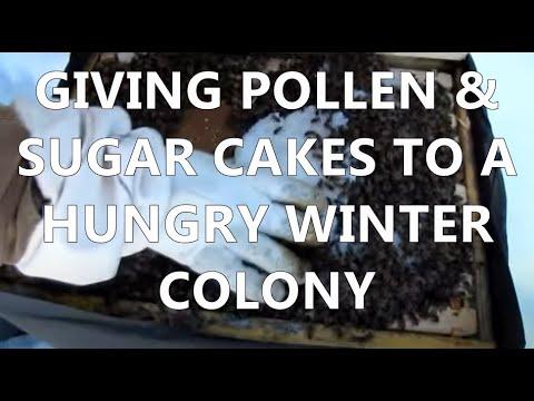 mudsongs.org: Pollen Patties