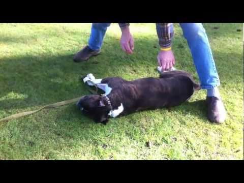 cane con attacco cardiaco salvato da passante! commovente..