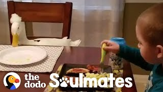 This Little Boy and His Duck are Inseparable | The Dodo Soulmates by The Dodo