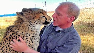 Nonton Man Reunites With African Cheetah Big Cat After 1 Year Absence    Do You Remember Me   A Documentary Film Subtitle Indonesia Streaming Movie Download