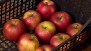Gyümölcsök és zöldségek téli tárolása