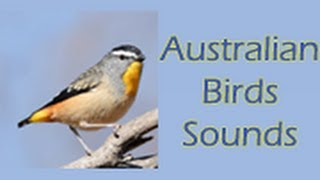 Australian Birds Sounds Free YouTube video