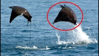 15 Animals You Didn't Know Could Fly by Epic Wildlife