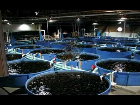FREE Success Tips For Fish Farm Business Owners.mp4