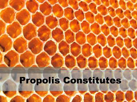 What Is Bee Propolis ?