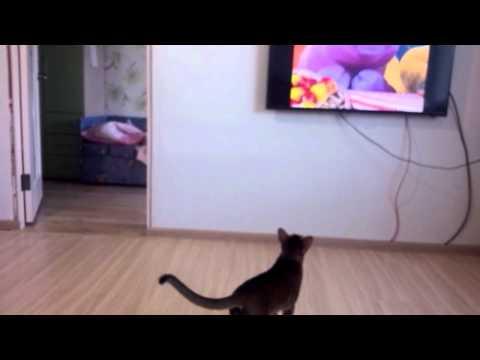 Санёк смотрит телевизор