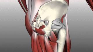 Muscles Of The Gluteal Region - Part 2 - Anatomy Tutorial