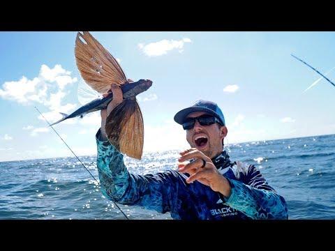 Catching Fish that can Fly!! - Thời lượng: 10 phút.