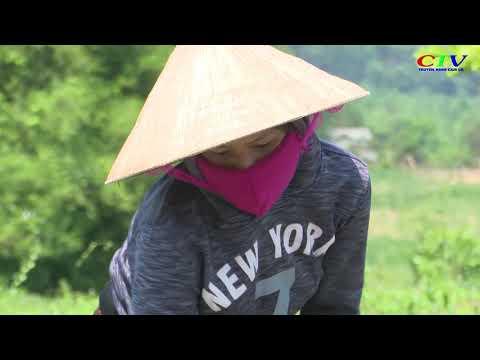 Phụ nữ Vân Kiều giúp nhau thoát nghèo bền vững