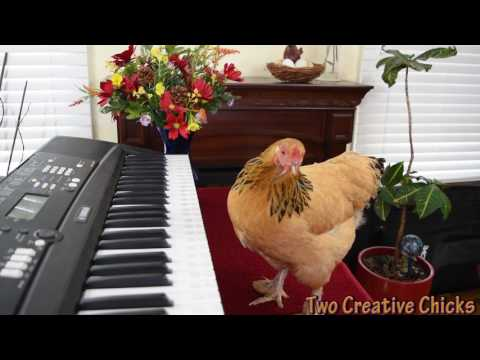 Piano Keyboard Gets Played By The Mozart Among Chickens