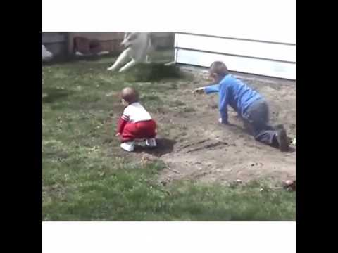 Dog Runs Over Baby