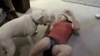 Video DOG Vs GIRL MP3, 3GP, MP4, WEBM, AVI, FLV September 2018
