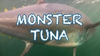 Download Video MONSTER TUNA - 1000 pound Giant Bluefin caught in record time in PEI - Cool Underwater Shots MP3 3GP MP4