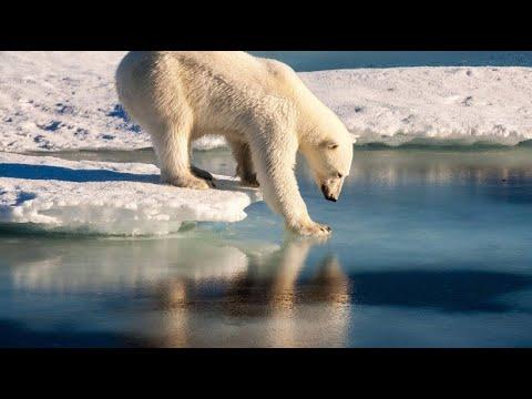 Diese Tierarten sind bedroht: Erstes Massensterben se ...