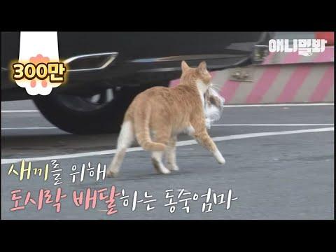 Bezdomna kotka przyjmowała jedzenie tylko w woreczku. Ludzie postanowili ją śledzić aby odkryć jej sekret!