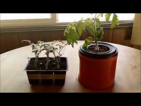 Soil vs Hydroponics- Seed Starting