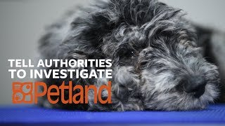 Petland: How sick is that puppy in the window? by The Humane Society of the United States