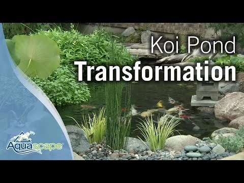 koi - Join the pond guys from Aquascape as they transform a koi pond into a natural water garden. http://www.aquascapeinc.com.