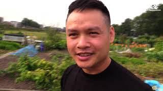 Vietnamese groentes verbouwen