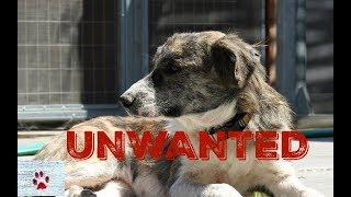 Unwanted dog - 3 years and 3 lives without a home by The Orphan Pet