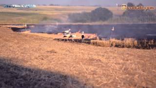 Лелеки на пожежах Сокальщини