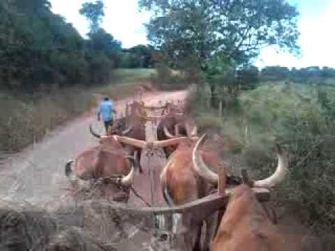 Carro de boi em Campanha Minas Gerais