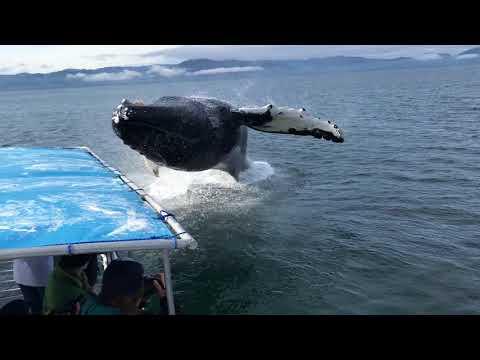 Valas on hypätä paatin päälle – No se meni läheltä!