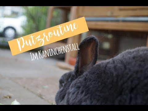Putzroutine im Kaninchenstall