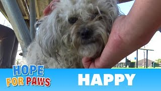 After living in the park for over a year, HAPPY was happy to be rescued. by Hope For Paws